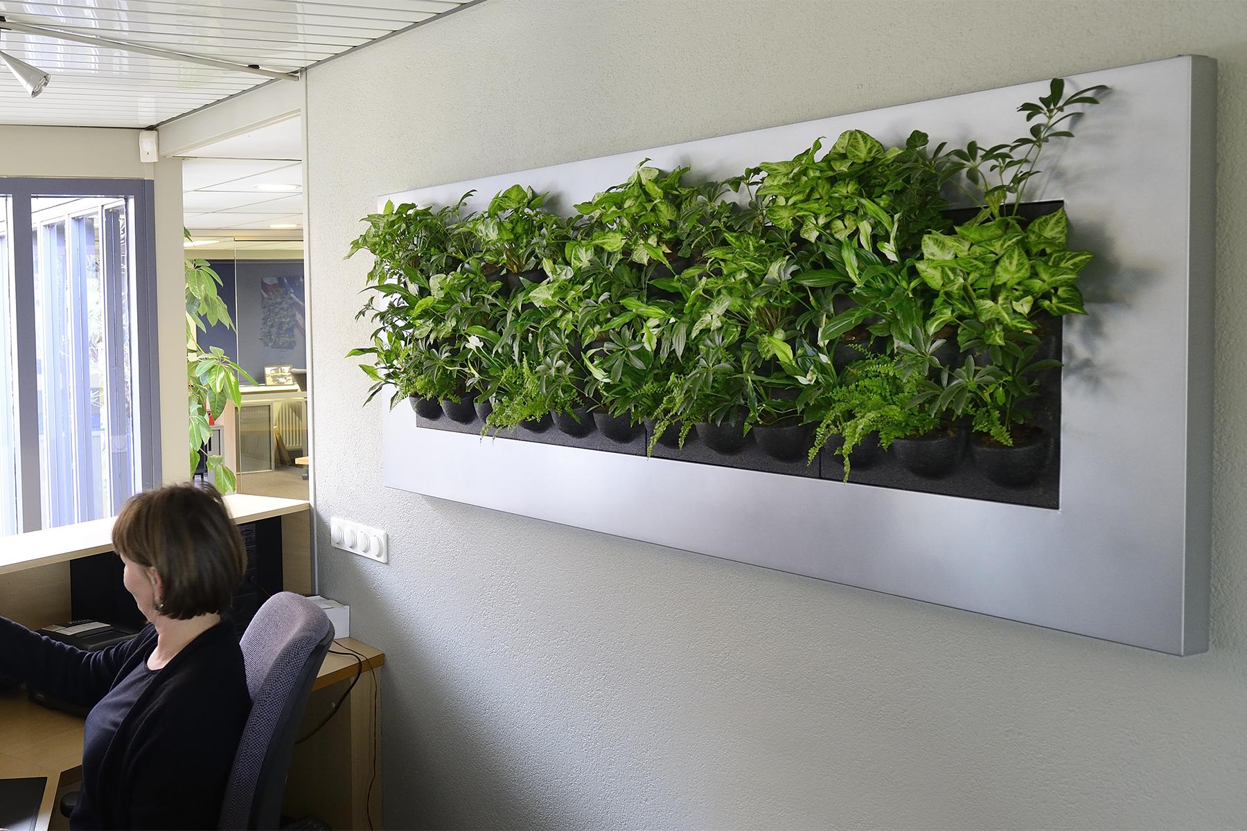 Silver´s COVE - Wandpflanzen