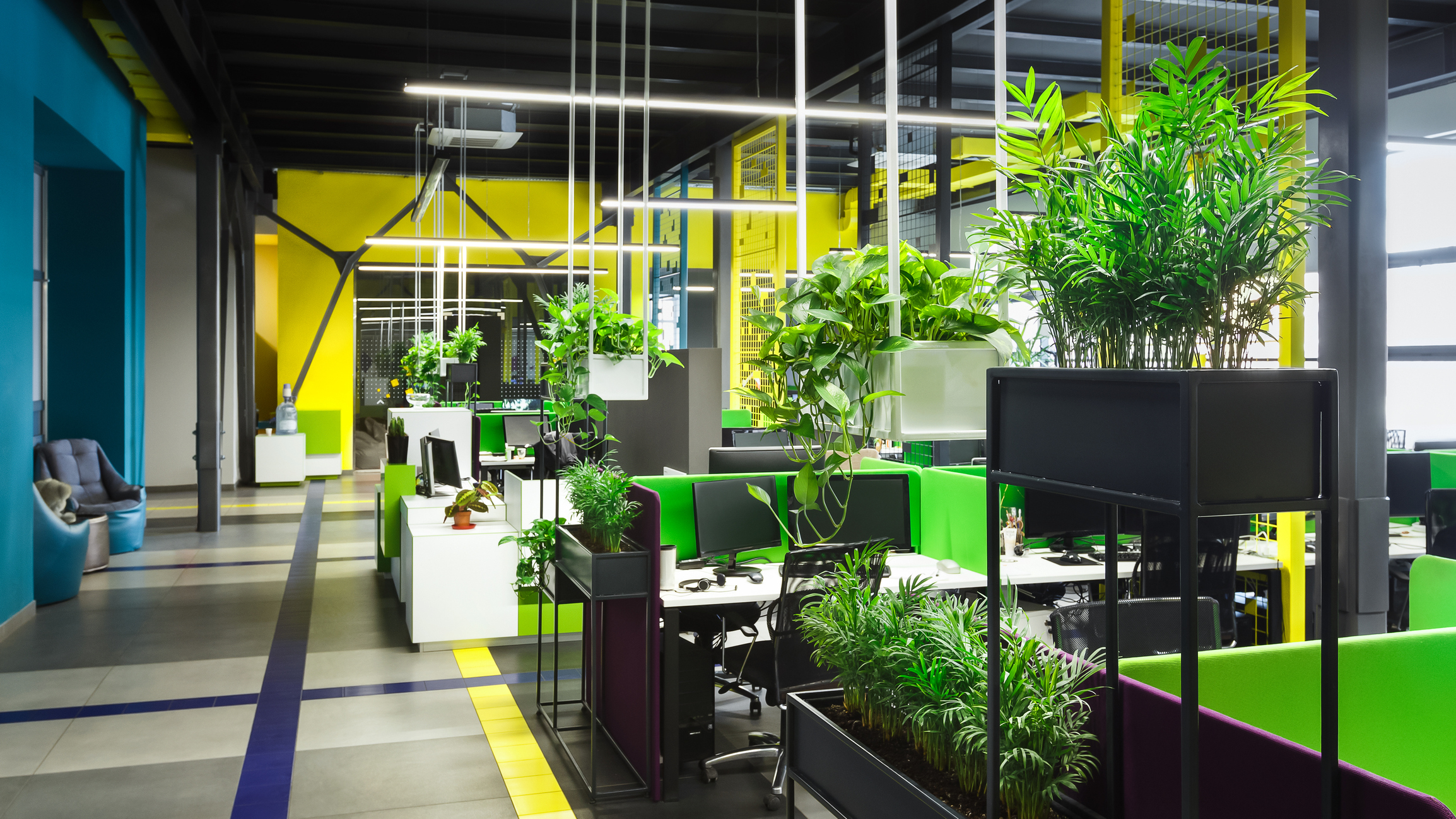 Light modern open space office with big windows and green plants for full time workers, panorama